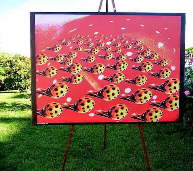 """Venerdì 8 giugno 2012 alle ore 11 al Parco della Trucca, verrà inaugurata la mostra """"Arte per tutti"""","""