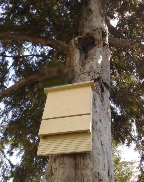 Parco delle Orobie: le bat box arrivano a Santa Brigida