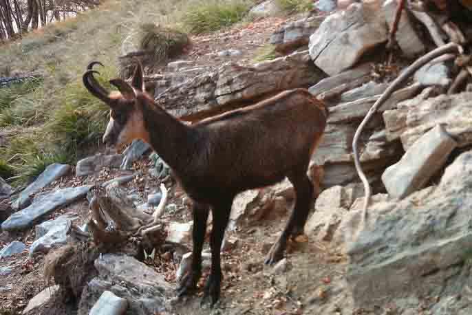 Parco Orobie: animali in fototrappola