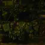 sabato: piazza alberico da rosciate