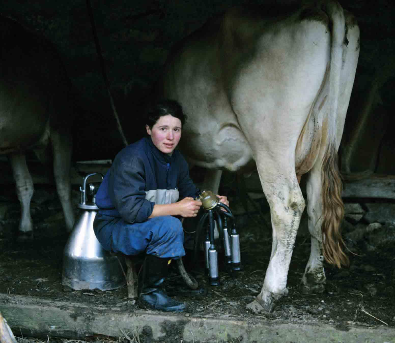 BERGAMOSICENZA 2013 – Come il latte diventa stracchino: domenica laboratori di caseificazione con il Parco delle Orobie Bergamasche