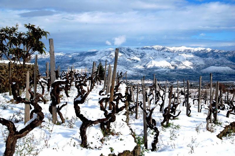Alla ricerca dell'eleganza: i vini d'alta quota