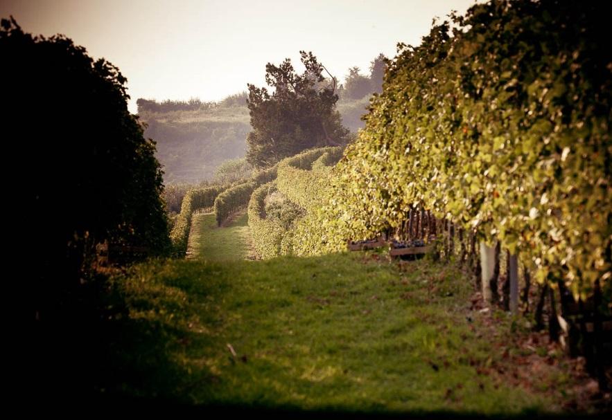 I tesori nascosti del vino italiano