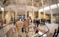 Un cavallo solidale ricoperto di gemme a Palazzo Creberg