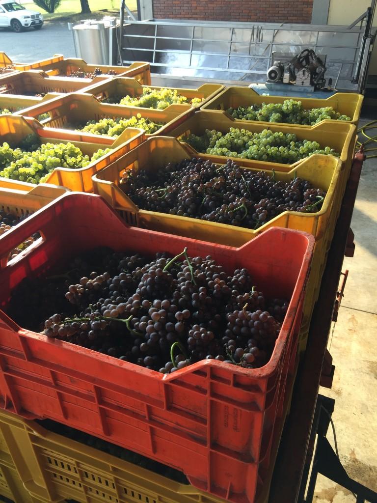 Cinque cantine bergamasche segnalate nella Guida Slow Wine 2017
