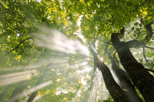 Il solstizio d'estate parla il linguaggio delle piante