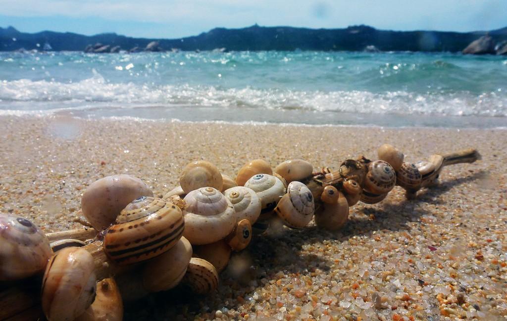 Sardegna, rubano conchiglie e sassi: bergamaschi denunciati