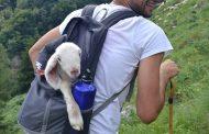 Convivenza possibile tra pastori e grandi predatori