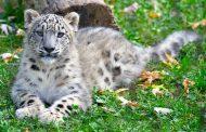 Riapre il Parco Faunistico Le Cornelle: gli animali si risvegliano