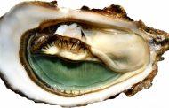 I love Ostrica: degustazione d'eccellenza all'Enoteca Castelletti