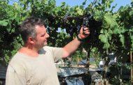 """Per i vini di Angelo Bertoli """"Bacco d'argento"""" a Pramaggiore"""