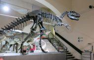 Prorogata la mostra per i 100 anni del Museo di Scienze
