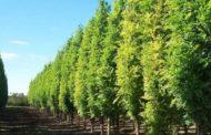 A Bergamo ci sono 39.200 piante: in 5 anni più 31 per cento