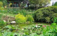 """L'Orto Botanico di Bergamo """"Lorenzo Rota"""" celebra la rinascita della natura"""