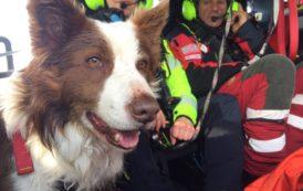 Ultimo grazie ai cani Zeus e Klaus del soccorso alpino