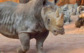 Domenica 22 settembre | World Rhino Day 2019 al Parco Le Cornelle
