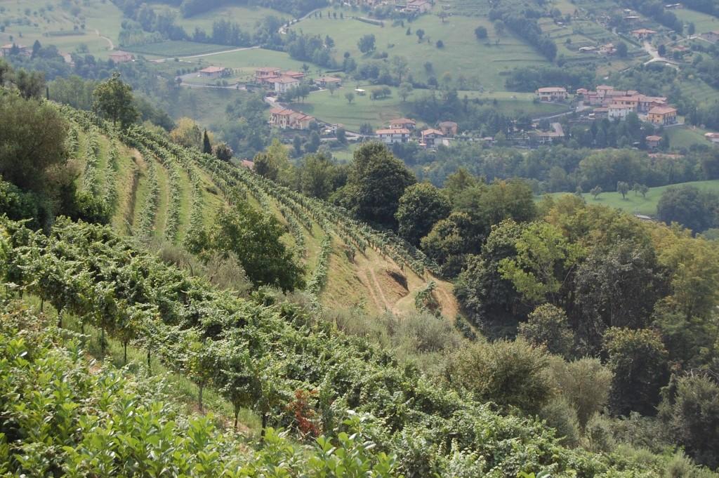 """Lo spumante """"il 33"""" di Colletto tra i 100 migliori vini d'Italia"""