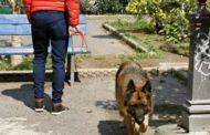 Tolleranza zero per cani senza guinzaglio a Seriate