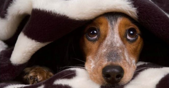 «Gli animali non trasmettono il virus, vogliate loro bene»