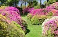 Ripresa degli Orti  Botanici della Lombardia