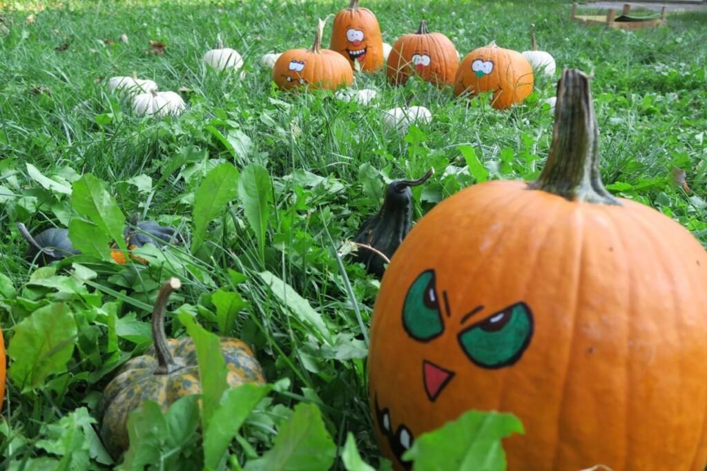L'autunno di Tulipania, paradiso delle zucche di Halloween
