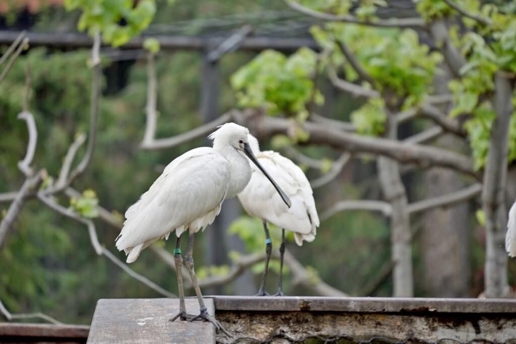 Il Parco Le Cornelle riparte con nuove specie